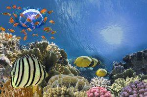 Aegypten Badeferien Rotes Meer Korallen und bunte Fische