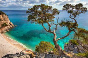 Sardinien_Bucht_alter knorriger Baum_Badeferien